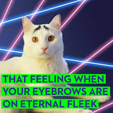 Hipster Cat Meme - 6 funny cat memes best cat memes from hamilton the hipster and sam