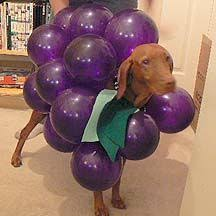 Dog Halloween Costumes Adults Dog Bunch Grapes Halloween Costumes Dog