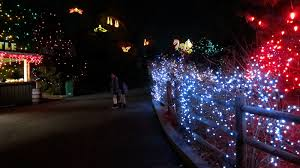 all the twinkling from denver u0027s zoo lights from gofatherhood