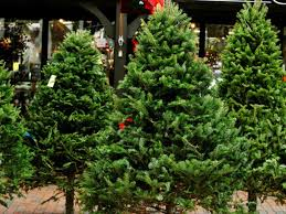 where to buy trees in waltham waltham ma patch