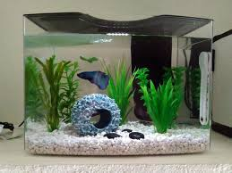 My AMAZING Betta Aquarium And How You Can Have e Just Like It