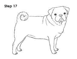 how to draw a dog pug
