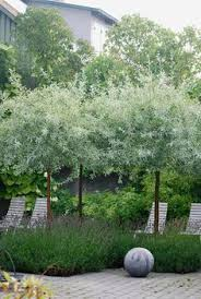 garden designer visit lavender fields in australia drought