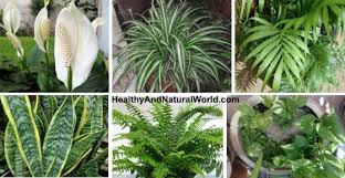 best indoor house plants 10 best air filtering house plants according to nasa inc images