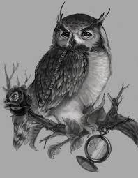 owl sitting on tree branch design owls tree