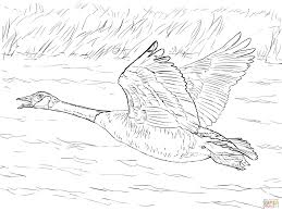 goose coloring page gooses coloring pages free coloring pages