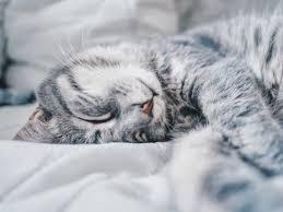 cutest pets in the world winners foap community