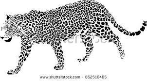 black white vector sketch leopard stock vector 570267049