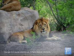 phoenix zoo lights members only attraction of the week the phoenix zoo a wonderful zoo with