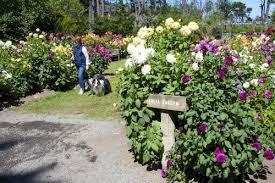 Quail Botanical Gardens Free Tuesday Mendocino Coast Botanical Gardens Visit Mendocino County