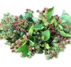 ornamental raspberry shelby tyson