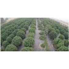 commercial farming u0026 growing
