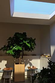 lights that mimic sunlight coelux harnesses led lighting to deliver california sunlight in a