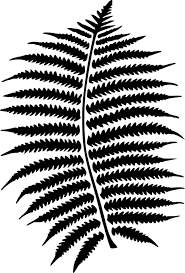 Free Picture Leaf Nature Fern Fern Forest Leaf Free Vector Graphic On Pixabay