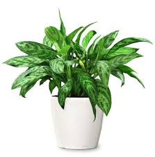 ohio is my reset button house plants that battle air pollutants