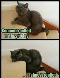 Tired Cat Meme - lolcats tired lol at funny cat memes funny cat pictures with
