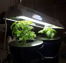 t5 fluorescent grow lights review best t5 grow lights reviews guide for growing cannabis