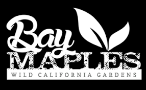 bay maples california u2013 wild california gardens