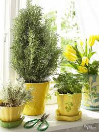lights to grow herbs indoors how to grow herbs indoors when a sunny window is all you have