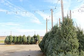 real christmas trees for sale how to the christmas tree