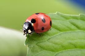 Ladybug Resume Ladybugs Russell Feed U0026 Supply