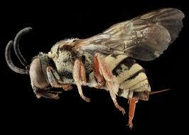 beepocalypse myth handbook dissecting claims of pollinator