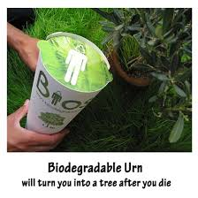 cremation tree refreshing home biodegradable urn spirit tree for yourself or