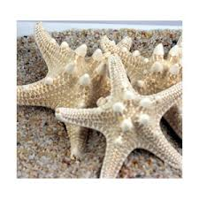starfish decorations wedding decorations white starfish decorations kno