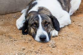 Tierheim Bad Segeberg Zuhause Gesucht Www Hundeseelchen De