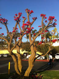 425 best san diego images on san diego southern