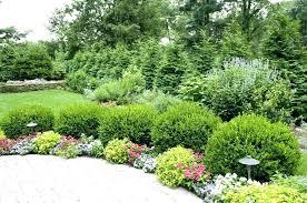 Bushes For Landscaping Landscape Bushes Plants Shrubs Mreza Club