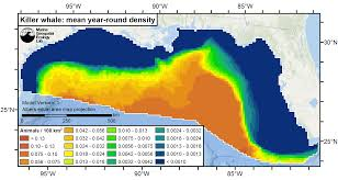 Gulf Of Mexico On Map by Gom Killer Whale Abundance Map 300dpi Png