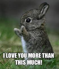 Cute I Love You Meme - i love you more than this much cute bunny quickmeme