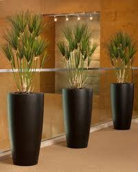 Plants In Home Decor Techieblogieinfo - Home decoration plants