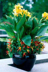Garden Containers Ideas - backyard vegetable gardening and top vegetables herbs to weeded