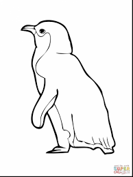 beautiful gentoo penguin coloring page with penguin coloring page