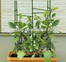 Climbing Plants On Trellis Strong Garden Tomato Trellis And Climbing Plant Support Cage Buy