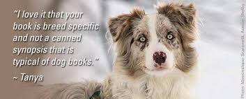 australian shepherd not eating guide to australian shepherd training u0026 care
