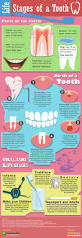 27 best images about dental ed u0027 on pinterest dental implants