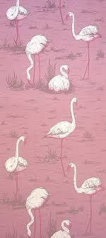 wallpaper with pink flamingos maria canavello mrasek accardi flamingos wallpaper pink white