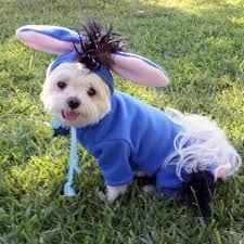 Animal Halloween Costumes 137 Pet Halloween Images Pet Costumes