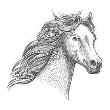 white graceful horse sketch portrait wild mustang with mane