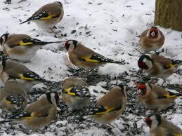 fabrication mangeoire oiseaux fabriquer ses mangeoires birdlab en 5 minutes u2013 éveil et nature