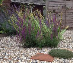 garden design garden design with pale gravel garden on pinterest