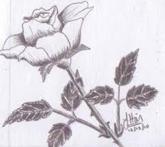 fast rose