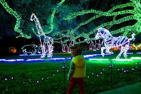 zoo lights houston prices crazy cozads houston zoo lights