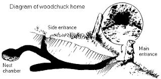 groundhog habitat