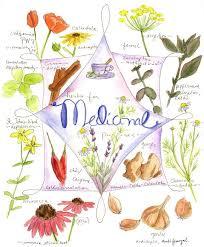 herb chart medicinal herb chart natural medicine pinterest herbs chart