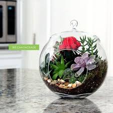 77 best moss ball terrarium images on pinterest plants terraria