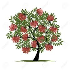 rowan tree with berries for your design royalty free cliparts